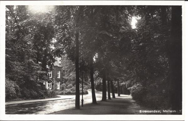 Mollaan, hoek Potgieterweg, 1954