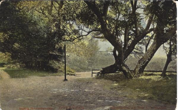 Brouwerskolkweg, 1907